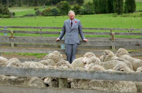 prince of wales wool