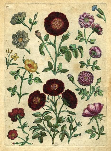 16. Collaerts Florilegium Antwerp 1590