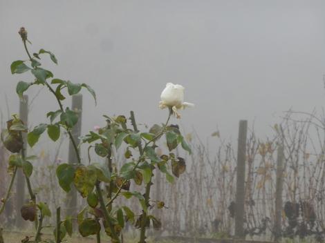 איטליה בנובמבר