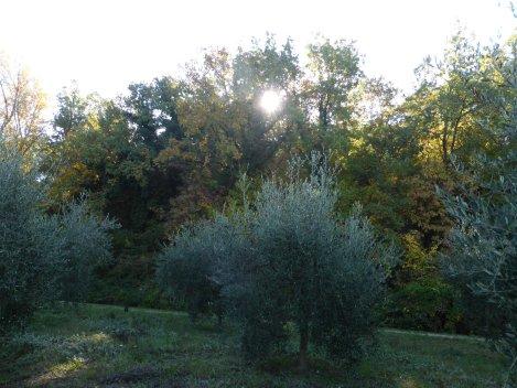 olive (13)