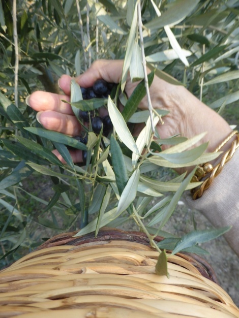 olive (6)
