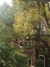 london nature14