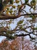 london nature2