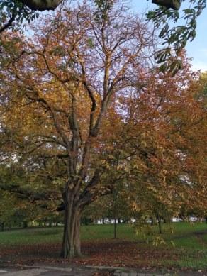london nature3