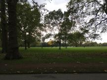london nature5